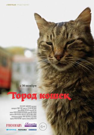 «Город кошек»